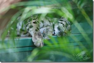 Дикие кошки Праги (3)