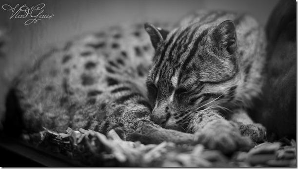 Дикие кошки Праги (7)