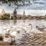 Свадебные фотографии Прага - Ирина и Алексей (Анонс)